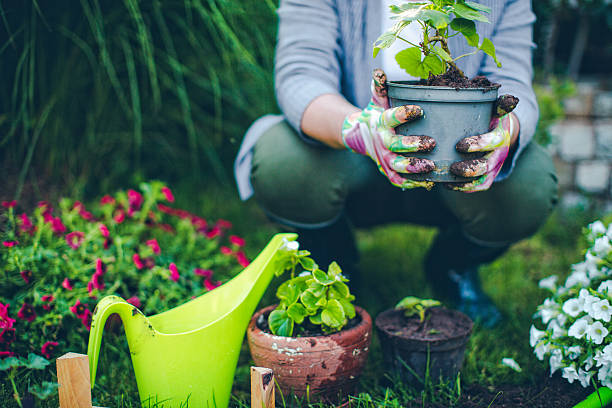 Gardening Is A Passion To Pursue